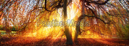 golden sunbeams in the autumn