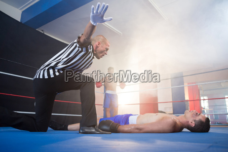 referee gesturing by unconscious male boxer