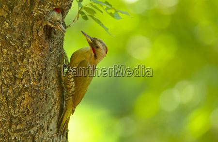 primer plano animal pajaro marron asia