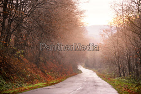 beautiful autumn forest with mountain country