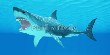 gran tiburon blanco bajo el agua