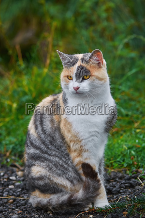 mascotas animal de peluche lieblingstier gato