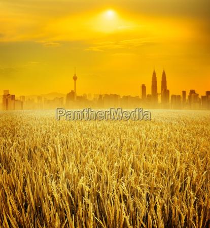 kuala lumpur city skyline and rice