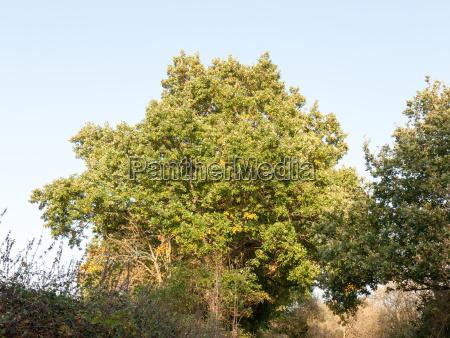 full lush green tree front lit