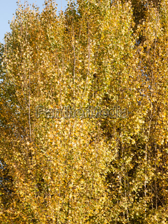 background texture pattern of golden autumn