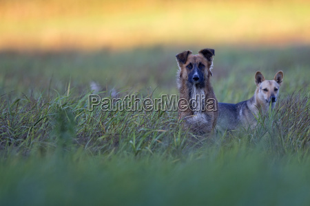 two dogs in a clearing