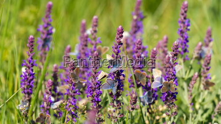 many butterfly eating together on the