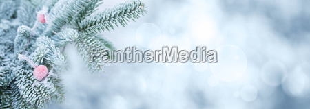ramas de abeto en invierno con