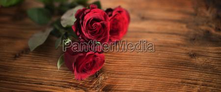 rosas rojas simbolicas para el dia
