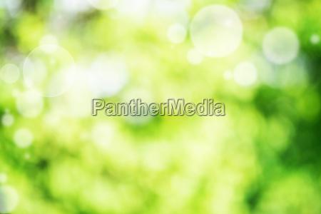 bokeh brillante del fondo verde abstracto