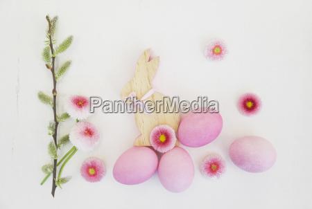 naturaleza muerta color flor planta madera