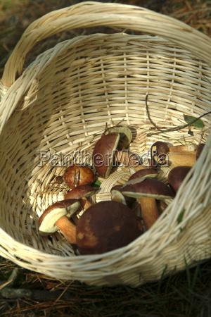 food aliment basket mushrooms mushroom fungus