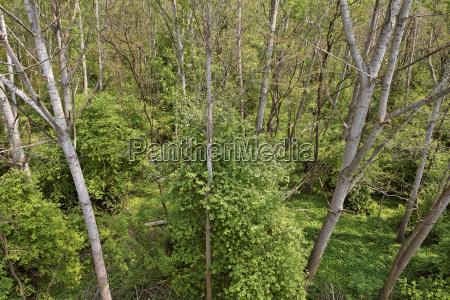 alluvial forest from above wachau niederosterreich