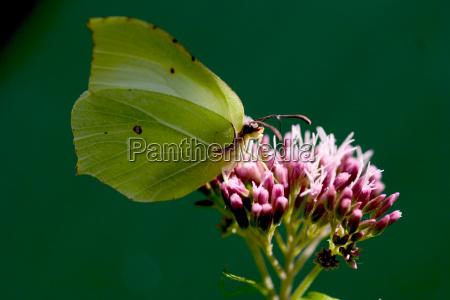 animal insecto los insectos mariposa los