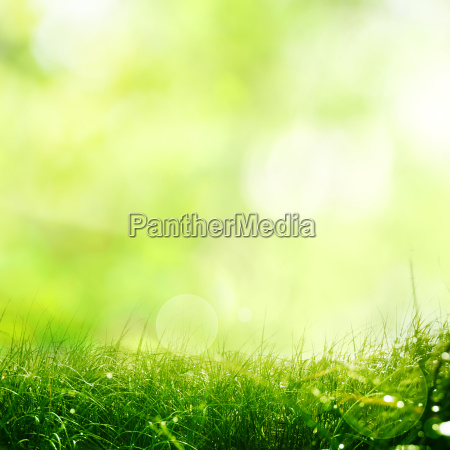 nature meadow with spring background