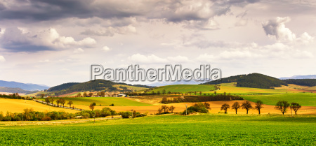 spring green field and meadows on