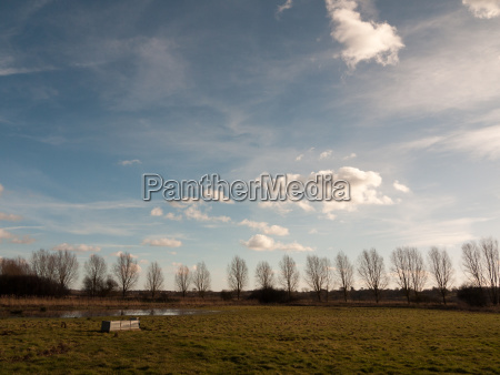 row of trees edge of farm