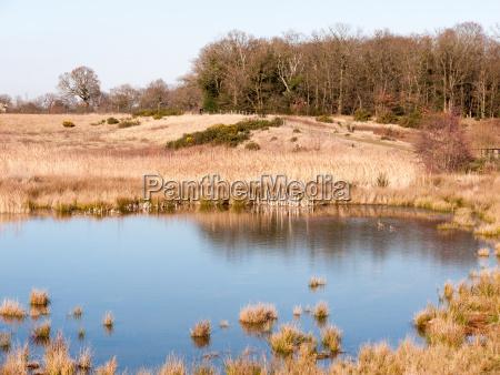 open summer day golden grass land