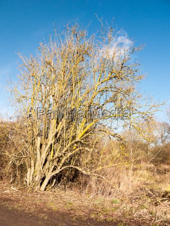 slanting tree bare branches summer spring