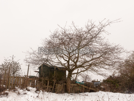 small wooden shed tree winter snow