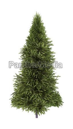 3d rendering fir tree on white