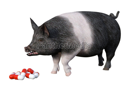 3d rendering pig and pills on