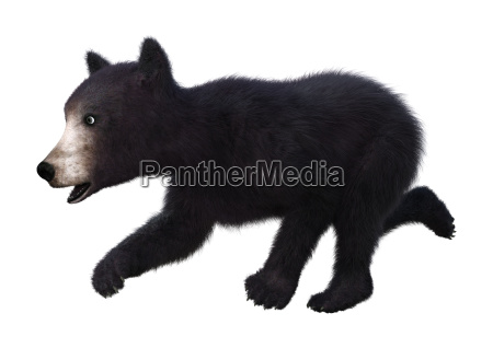 3d rendering black bear cub on