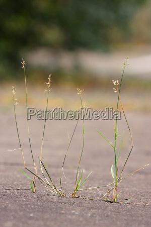 contraste hormigon hierbas asfalto ruptura columna