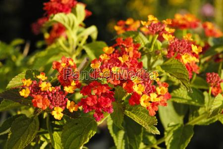 jardin flor las maravillosas flores flowerage
