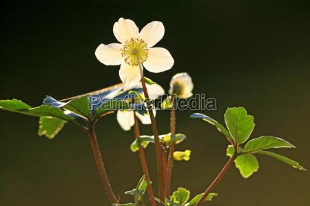 hoja flor las maravillosas flores flowerage