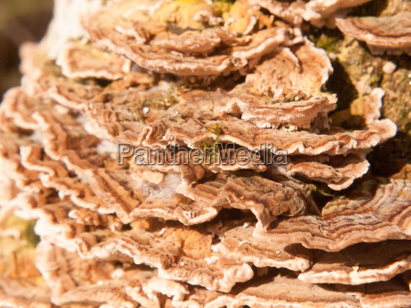 close up macro of growing bracket