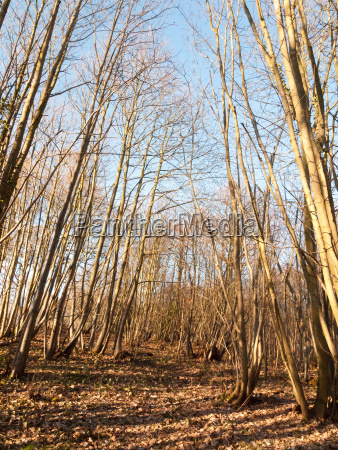 inside wood with many tree bare