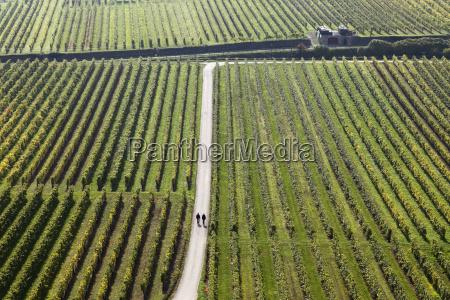 autumn vineyards near unterloiben wachau waldviertel