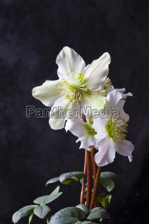 primer plano color flor planta las