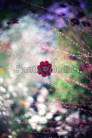 medio ambiente jardin cosmos flor planta