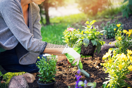 mujer plantando flores de verano en
