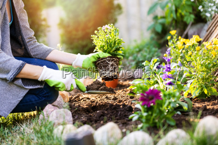 jardinero plantacion de flores en la