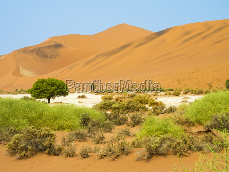 paseo viaje medio ambiente arbol desierto