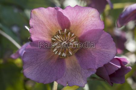 primer plano flor planta las maravillosas