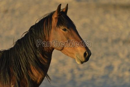 caballo africa namibia retrato monumentos retrato