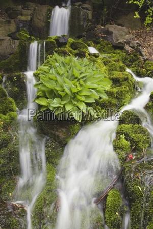 luz flujo parque hojas eeuu cascada