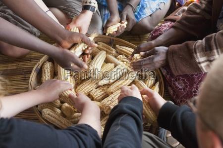 hands threshing corn manica mozambique africa