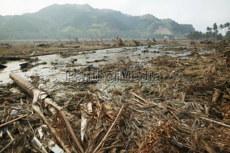 paisaje de desastre con arroz arropados