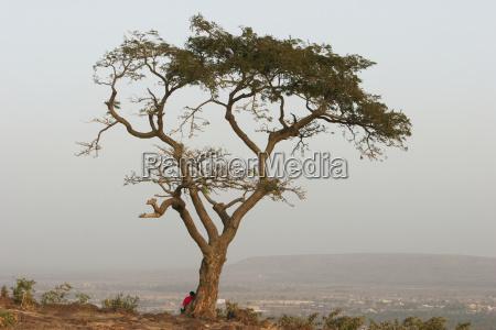 educacion arbol africa horizontalmente rama al