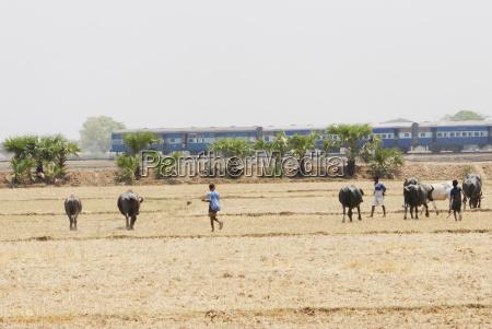 tren vehiculo transporte asia india por