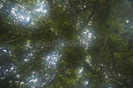 parco nazionale africa giungla tropicale madagascar