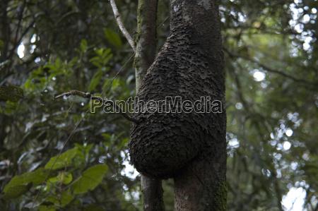 parco nazionale africa giungla nido tropicale