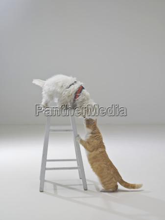 taburete amistad saludos color americano animal