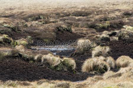color suelo campo caucasico europeo europa