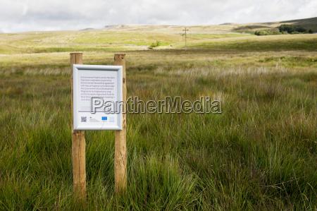 moorland in a regeneration scheme patrocinado